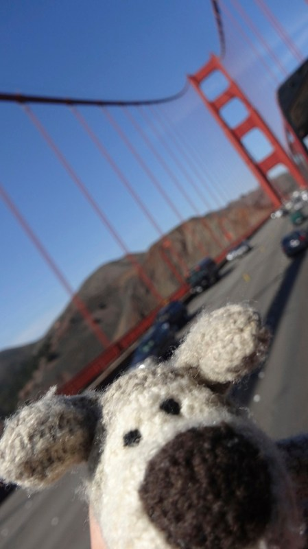 Boofle in San Fran