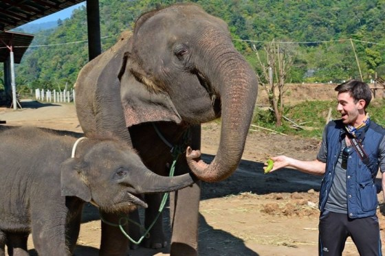 Feeding elephants in Thailand