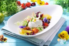 World of Color Restaurant_Mixed Heirloom Tomatoes and Burrata Cheese Salad