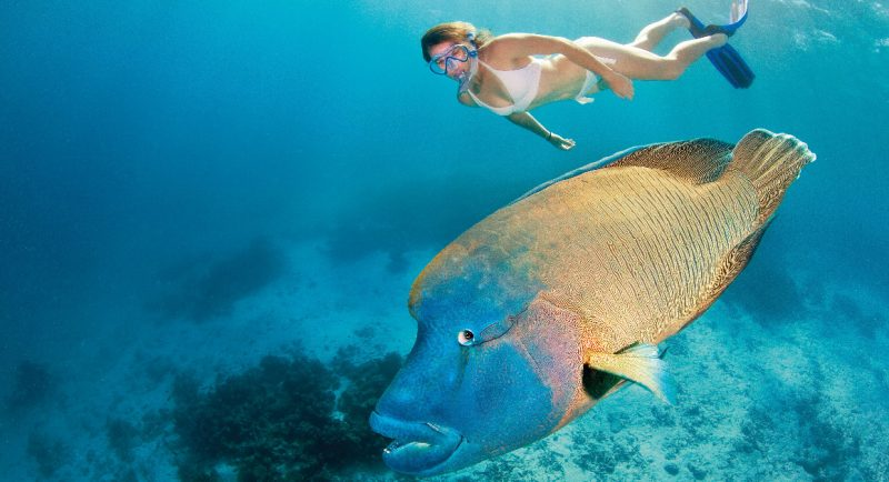 Great Barrier Reef || Travel Boating Lifestyle | Photo TEQ