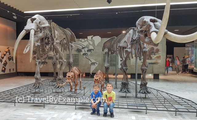 Boys and a family of mammoths