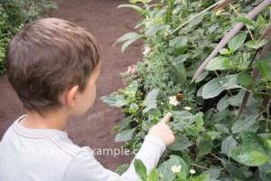 Butterflies in the Botanic Gardens