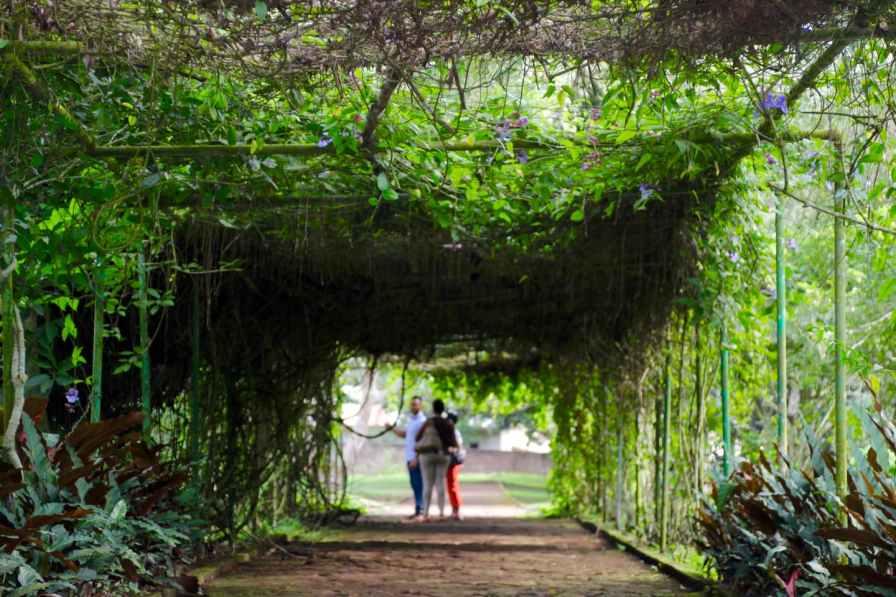 Aburi Gardens pergola lovers lane