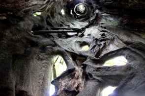 Aburi Botanical Gardens strangling ficus