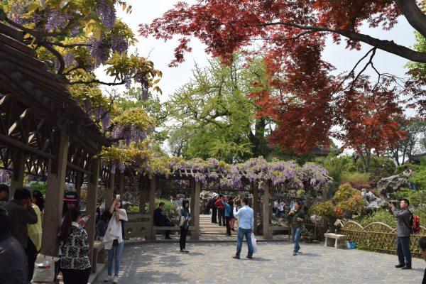 באביב מתמלאים הגנים בפרחים צבעוניים, גן חורשת האריה (צילום: טל ניצן)