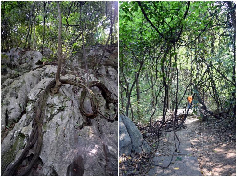 לשורשים ולענפים חיים משל עצמם (צילום: טל ניצן)