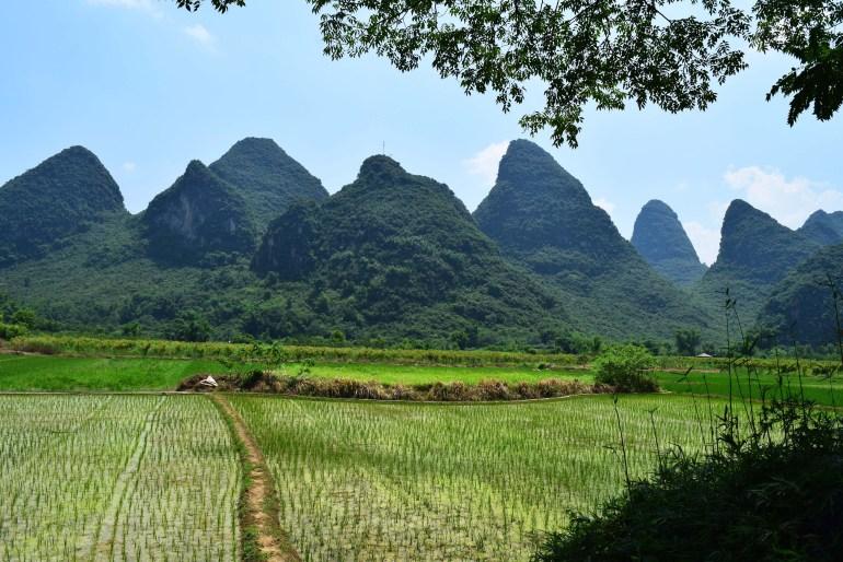 שדות אורז בעמק נהר יולונג (צילום: טל ניצן)