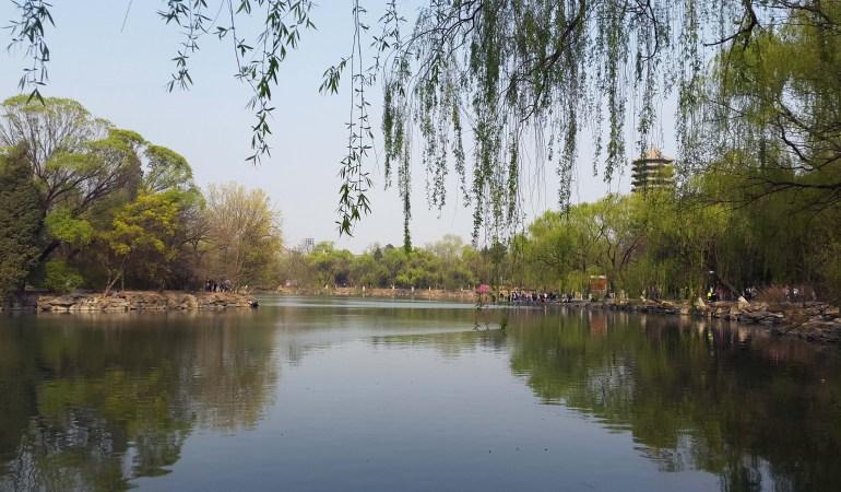 אביב באוניברסיטת פקינג (צילום: מאיה ציפריס)