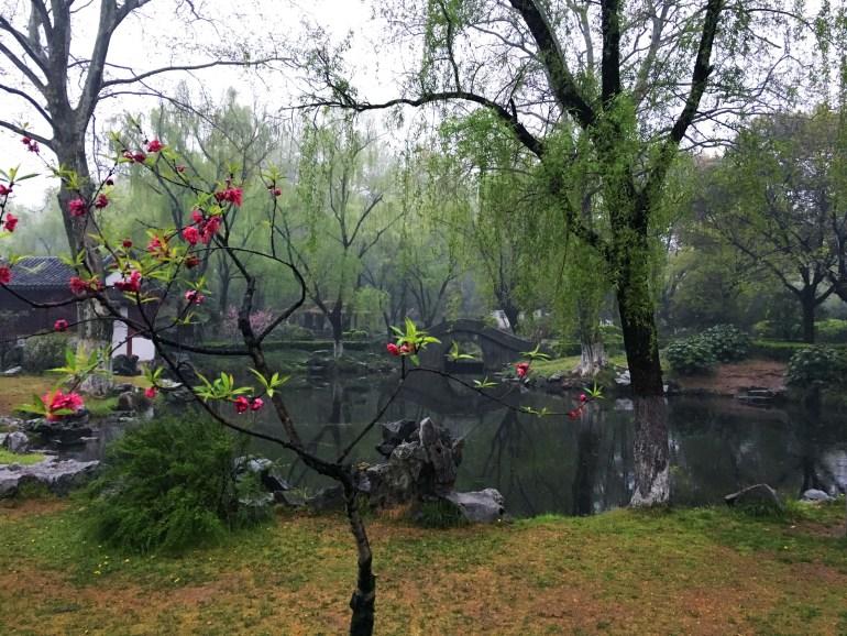 שרידים אחרונים של פריחה בגן פרחי השזיף (צילום: דן ברמן)