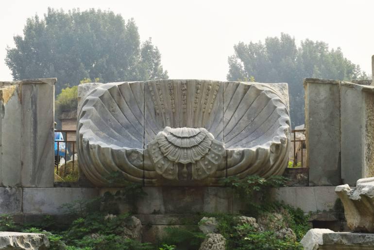 צדפת האבן  (צילום: טל ניצן)