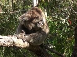 Australia 2008 045
