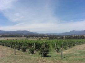 Australia 2008 077
