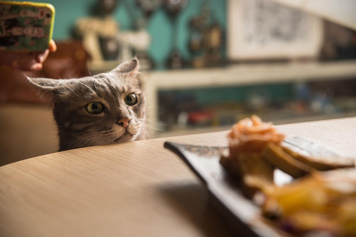 半夜睡不著覺,可以來這間有貓貓相伴的24hr咖啡館殺時間
