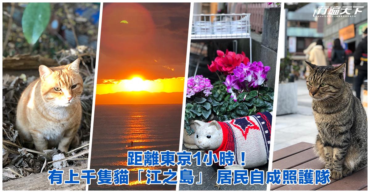 距離東京1小時!有上千隻貓「江之島」 居民自成照護隊