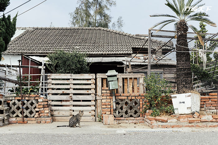 被遺忘的昔日高級住宅區,現在的台南貓樂園
