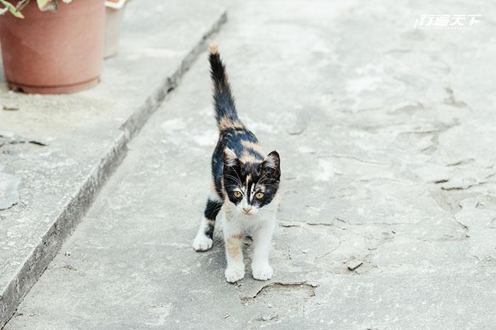 台南「台鹼日式宿舍群」  高級住宅變貓咪樂園
