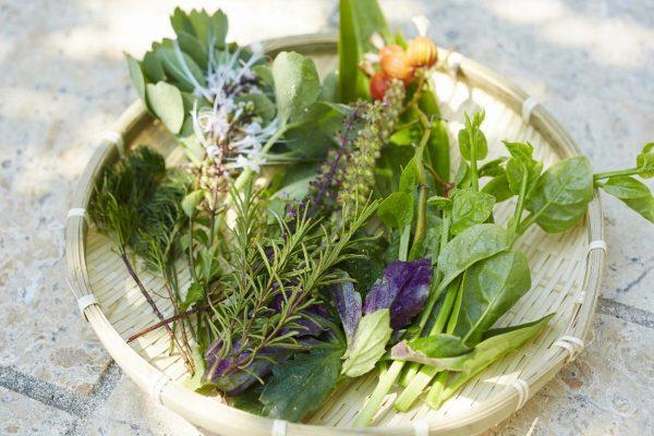 星野,虹夕諾雅,竹富島,沖繩,庫莫瑪米,種子取祭典