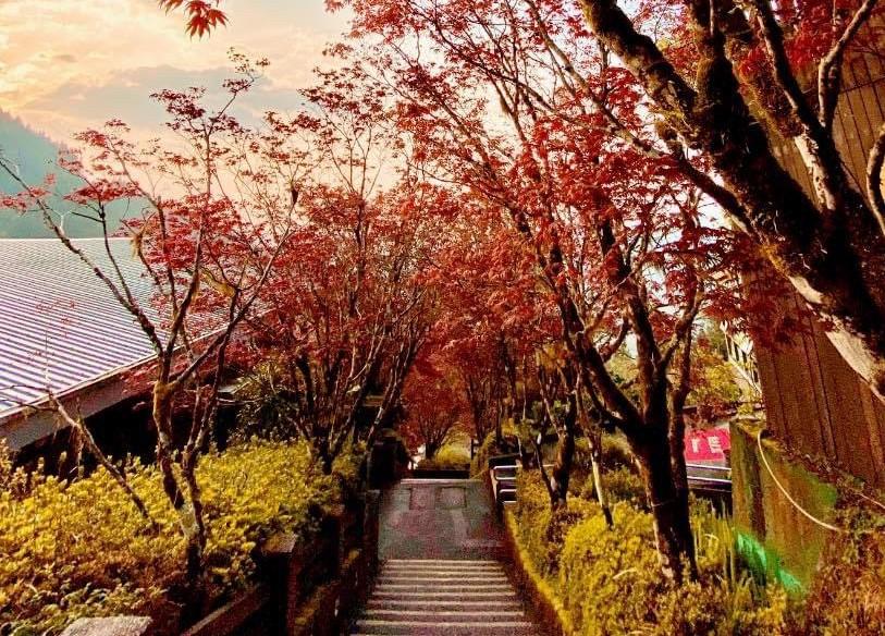 【宜蘭.旅】春天竟有紅楓可拍 太平山絕美森林步道紅到夏天