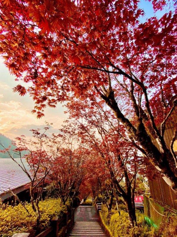 宜蘭,太平山,中央階梯,賞楓,見晴懷古