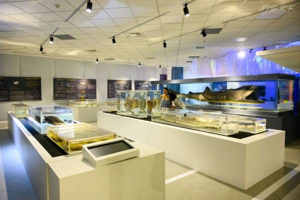 海洋科技博物館,基隆市,潮境公園,獨木舟,潮境海洋中心
