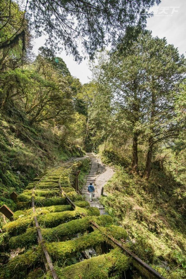 全球最美秘境步道在宜蘭 這個角度最好拍 6