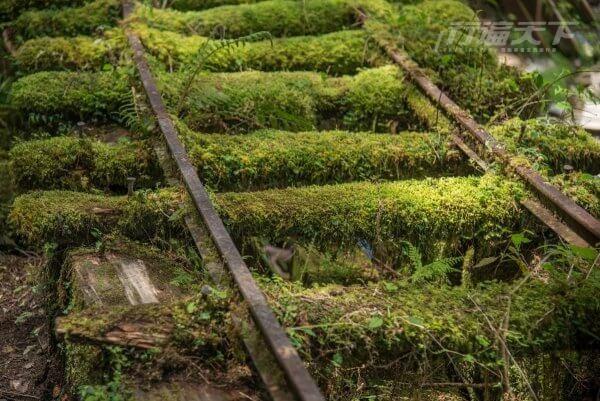 全球最美秘境步道在宜蘭 這個角度最好拍 3