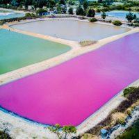 【金門.嫩】是誰灑成粉紅湖 金門出現上帝調色盤