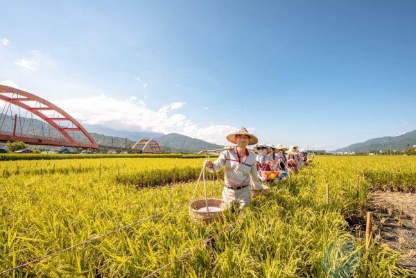 可樂旅遊,鄉村體驗,鄉下,稻田餐桌