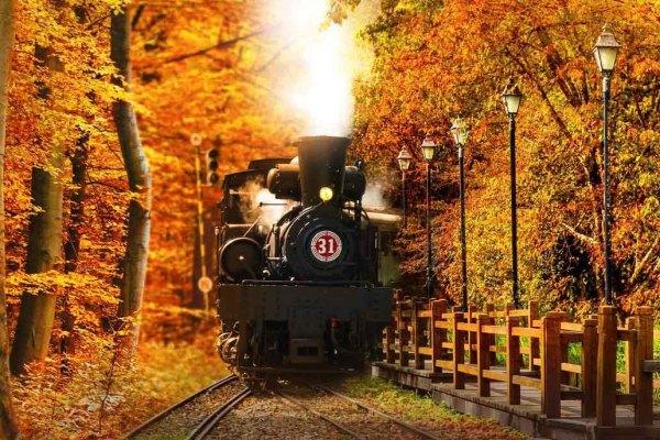 秋天,楓紅,秋天賞楓,阿里山,小火車,蒸汽火車,檜木列車,雄獅旅遊,專車,專屬司機導遊