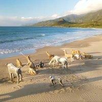 屏東景點|12隻海邊動物園現身屏東沙灘 落山風再大都吹不走