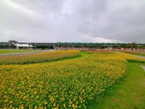 大佳河濱公園,花海,波斯菊,狼尾草,花季,打卡
