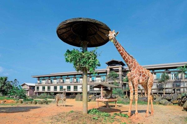 新竹,關西,六福莊,非洲,動物園,非洲動物,面具節,編髮,拇指琴