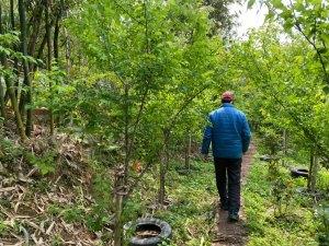 桃園,咖啡,農業,良美農場,小木屋休閒農場,好楓戶農家,白雲山林,復興,龜山