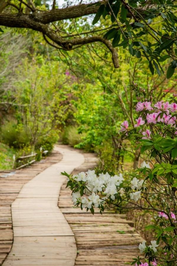 苗栗,三義,山那邊,綠葉方舟,森林,賞花