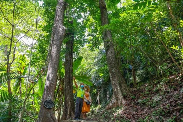 台東,知本,森林遊樂區,知本森林遊樂區怎麼玩,步道