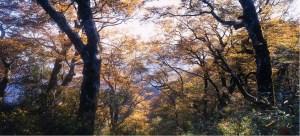 太平山,見晴懷古,翠峰湖,山毛櫸,步道
