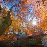 秋季限定|楓葉季來了! 福壽山「松盧」秒到日本,大雪山「賞楓、雲海」一次滿足