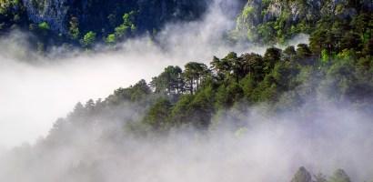 Zmiany klimatu. Jedna czwarta gatunków Europy zagrożona wyginięciem.