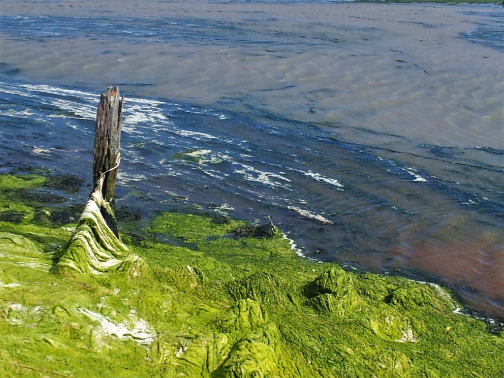Keyhaven marsh hampshire solent nature reserve