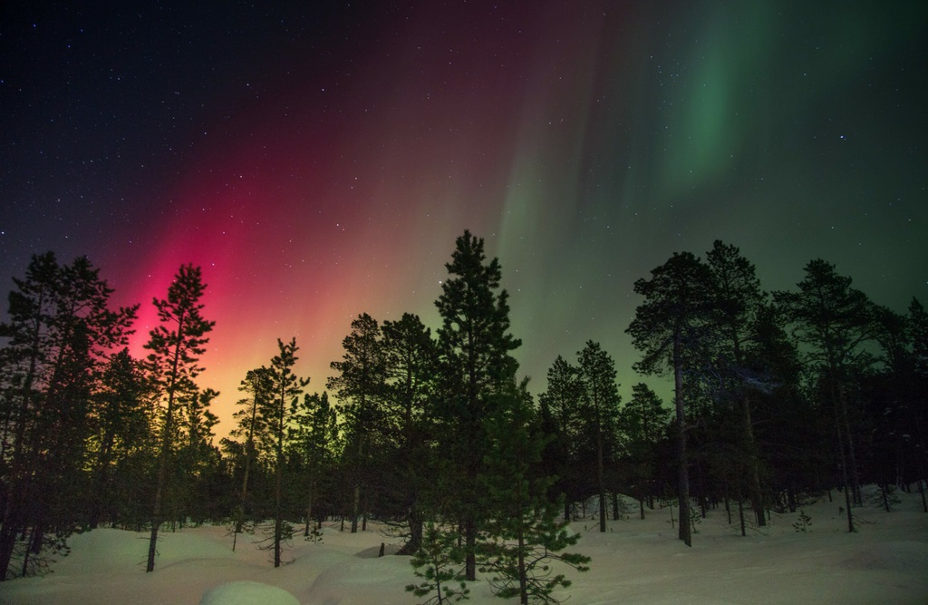 Aurora Borealis or Northern Lights, in a snowy pine forest setting.