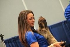 Sloth from Sea World www.traveldestinationbucketlist.com