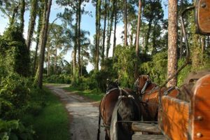 Disney's Fort Wilderness Carriage Rides