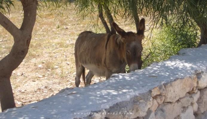 Come raggiungere Koufonissi dall Italia - mulo
