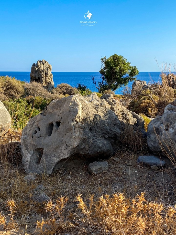 Fossil Forest Greece