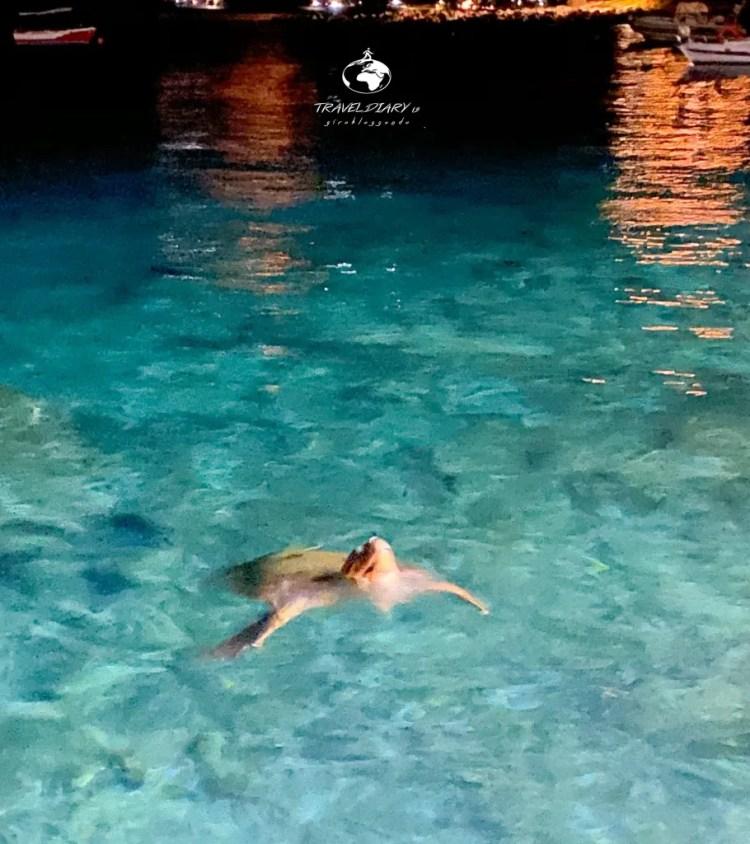 Una tartaruga nuota nelle acque di Limeni nel Mani, Grecia