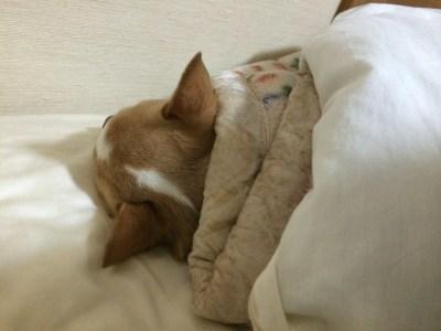 寝ているキキ