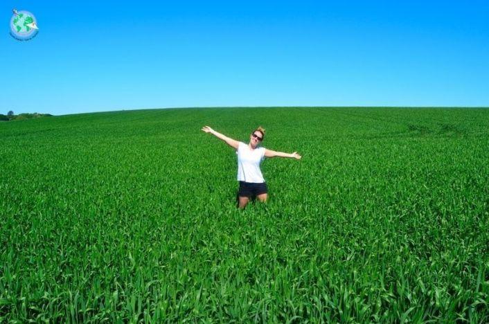 Ara en un campo de trigo
