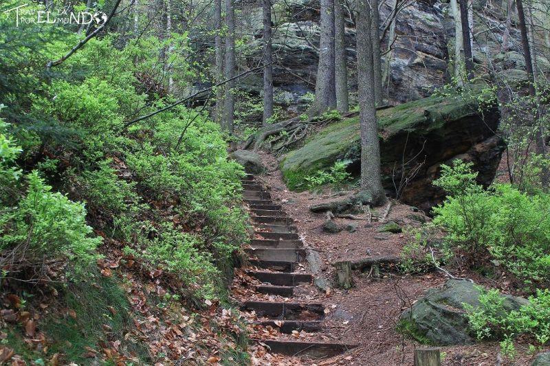 Escaleras por el bosque