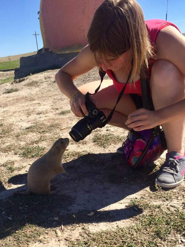 curious prairie dog badlands national park