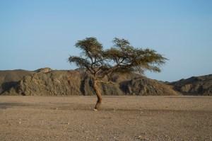 desert Egypt